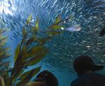 Aquarium of the Bay San Francisco attractions